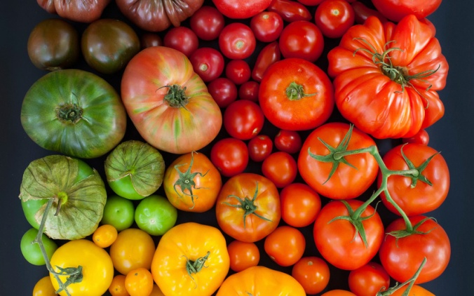 colour-tomatoes