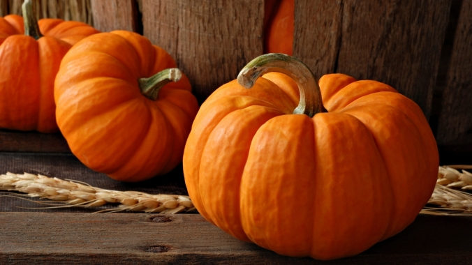 6855219-pumpkin-wallpaper